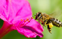 Attracting Bees to Your Garden